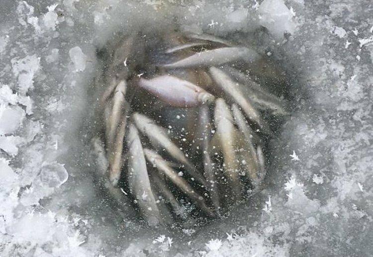 Что такое глухозимье для рыбалки (значение термина, влияние на ловлю)