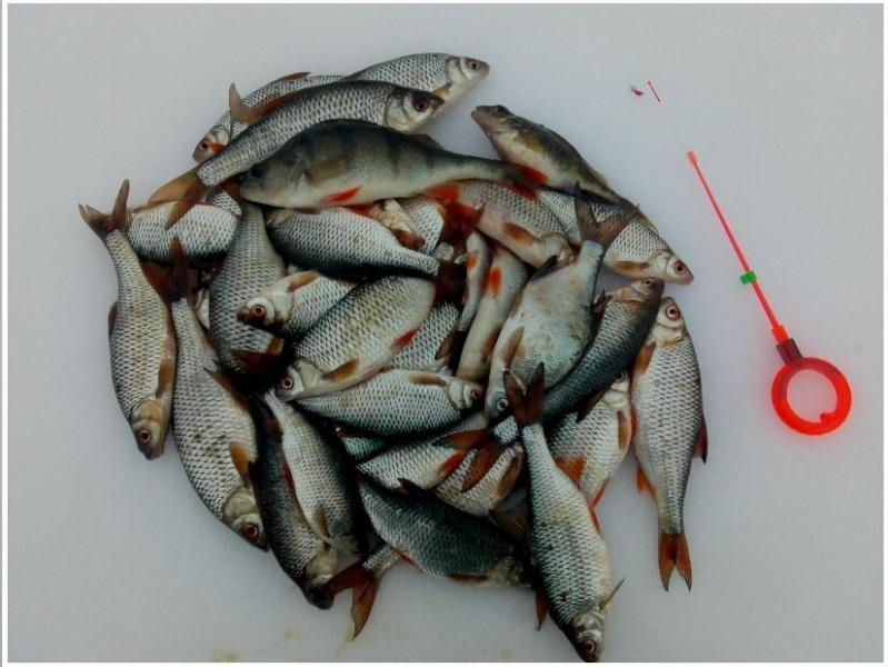 Календарь рыбака на декабрь