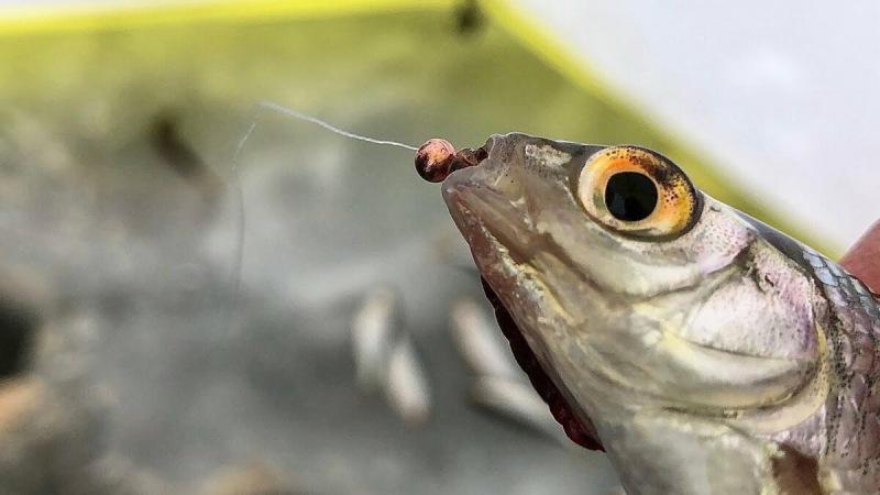 Новичку о рыбалке. Как выбрать мормышки?