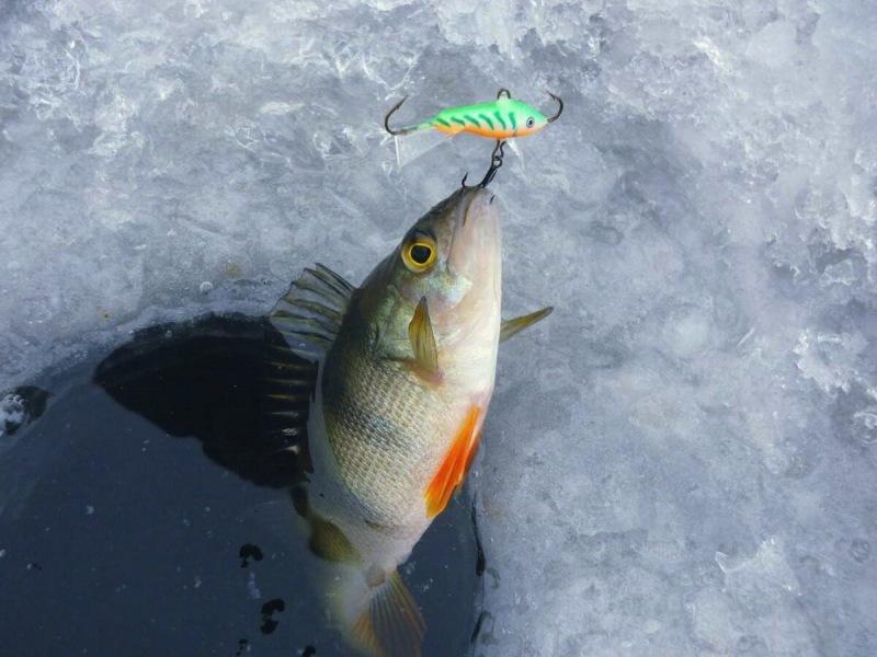 Новичок на рыбалке. Какие приманки выбрать для зимней ловли окуня?