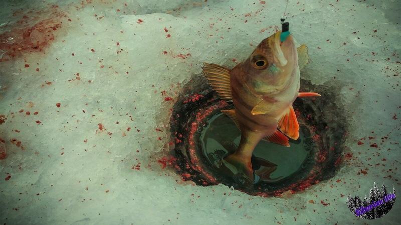 Попытался поймать рыбу на наживку, купленную в магазине детских игрушек по совету знакомого рыбака