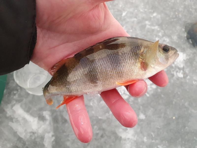Рассказали, как на реке зимой ловить крупняк! Сегодня попробовал эту схему. Что удалось поймать. Попытка номер 1