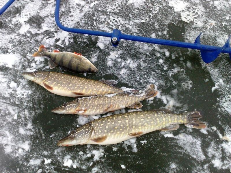 Секреты зимней рыбалки. Ловля на жерлицы по отмелям