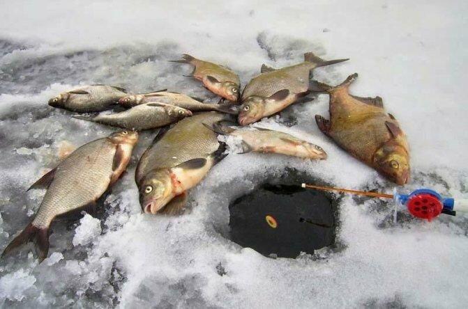 Зимняя ловля леща. Два правила успешной рыбалки