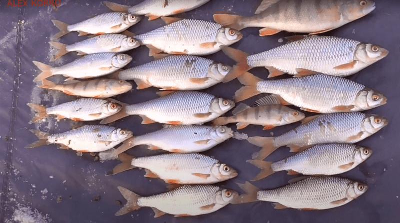 Зимняя Снасть для ловли крупной Плотвы «Парящая Наживка»