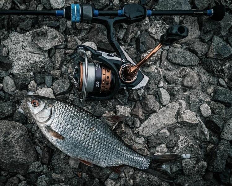 Как искать белую рыбу при ловле на спиннинг?