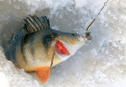 Как правильно ловить окуня на блесну зимой. Актуально в конце сезона!