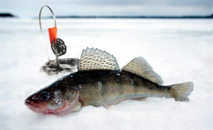 Как правильно ловить судака зимой. Часть 2. Как выбрать место ловли и подобрать нужные снасти для ловли