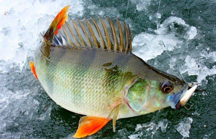 Календарь рыболова: Февраль - не повод прятаться от природы