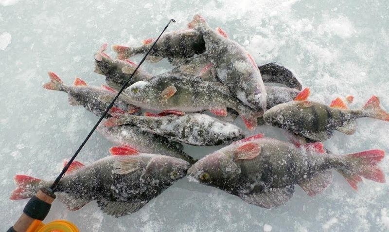 Календарь рыболова на февраль 2021