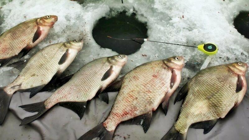 Ловля на мормышку в феврале. Все, что нужно знать рыболову!