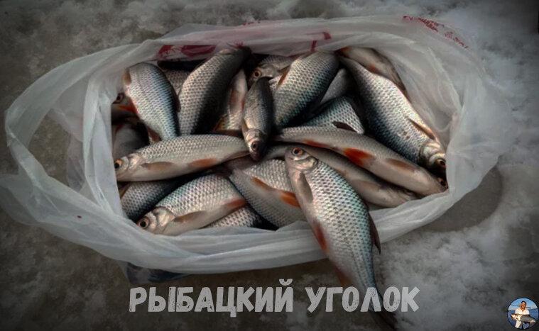 Малоизвестная насадка из ваты на которую я зимой ловлю рыбу целыми мешками. Делюсь рецептом приготовления
