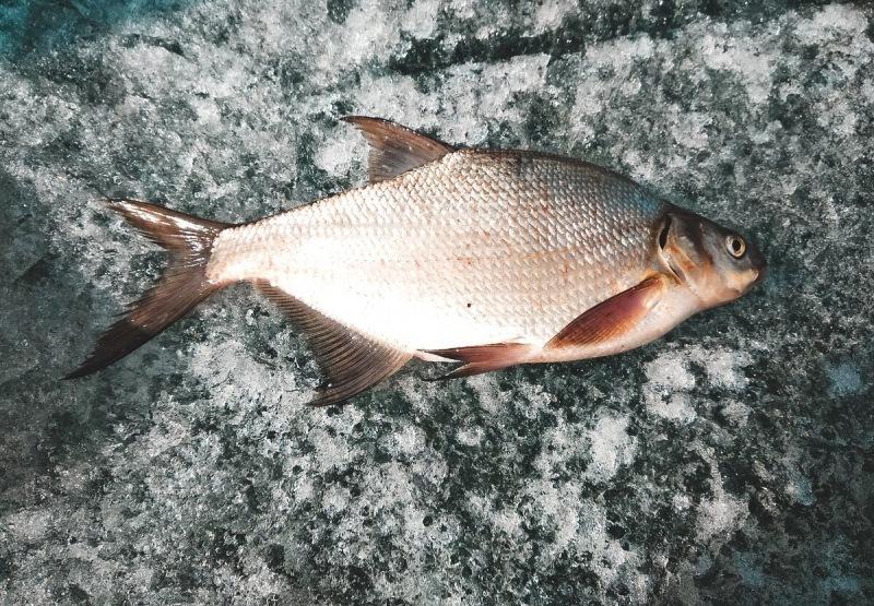 Почему у одних не клюёт, а другие ловят рыбу и как лещ ломает стереотипы