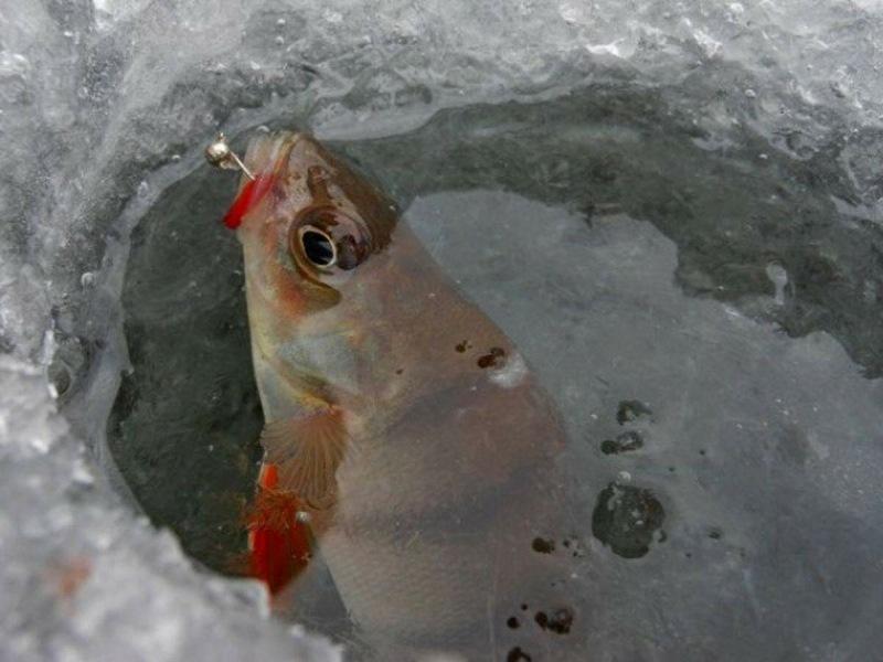Последний лед не за горами! Выбираем уловистые мормышки для ловли окуня!