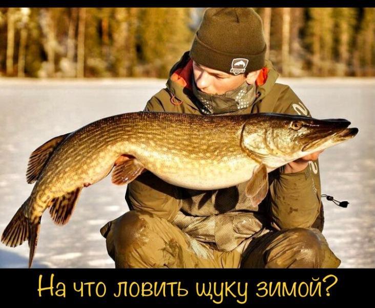 Рассказываю про насадку для ловли щуки и зимой и летом. Опытные рыбаки не рассказывают о ней, так как опасаются конкуренции.