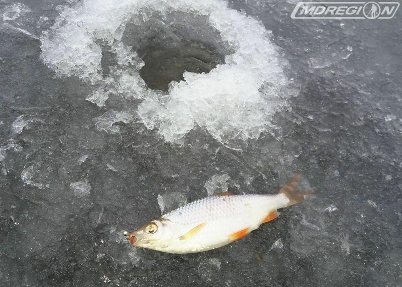 Рыбалка после небольшого снегопада
