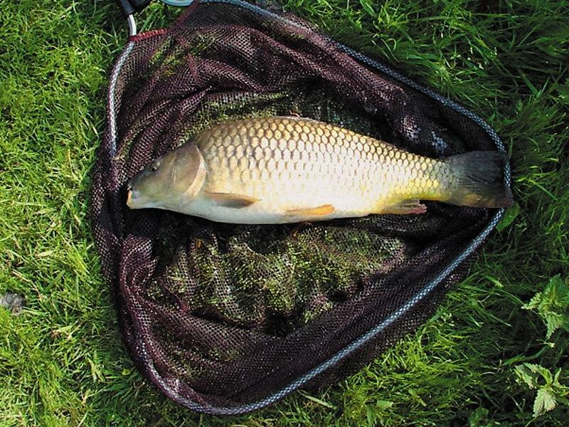 Весенний успех в ловли карпа-прикормка! Какие ингридиенты использовать и как их преподнести, чтобы заинтересовать рыбу? Разбирём