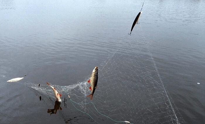 Воблер зацепил сеть. И что теперь делать честному рыбаку?