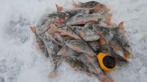 Вольфрамовые мормышки и последний лед. Как ловить больше рыбы?