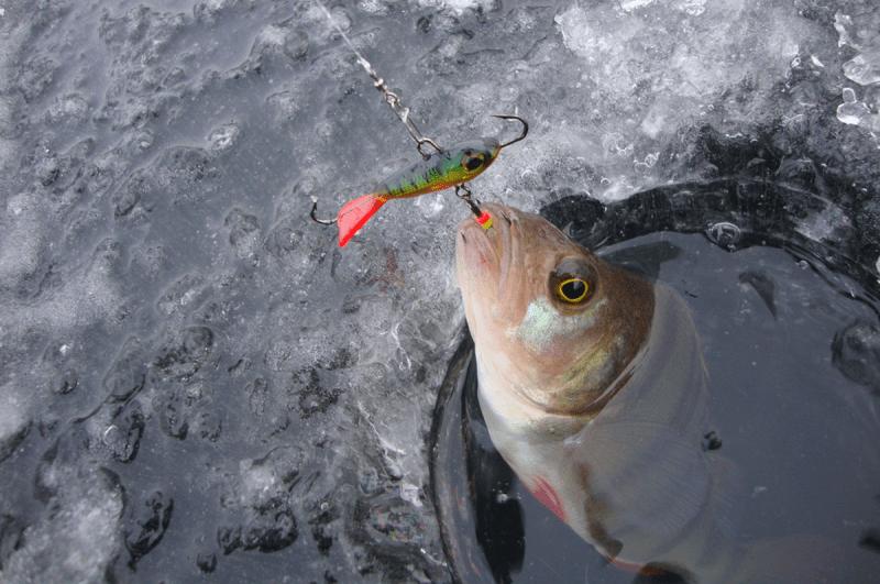 Зимняя ловля на балансир. Все особенности в одной статье!