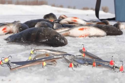 Зимняя ловля на блесну. Все, что нужно знать рыбаку.