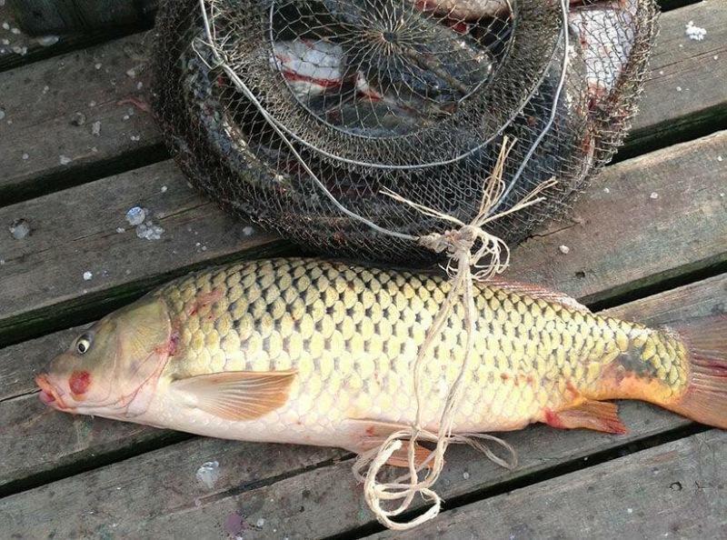 Что нужно знать, чтобы ловить крупного сазана весной? Рассказываю, основные этапы подготовки к рыбалке!