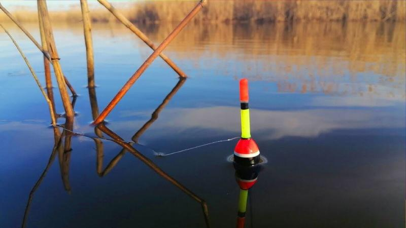 Что нужно знать начинающему рыбаку при ловле на поплавок? Рассказываю в этой статье.