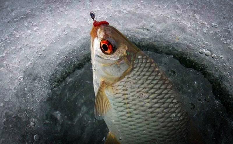 """Когда заканчивается """"глухозимье""""? Где искать рыбу и на что ловить..."""