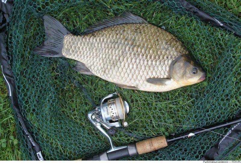 Ловля карася ранней весной. О чем молчат опытные рыболовы?