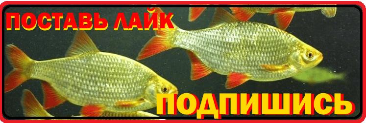 Насадка, на которую рыба так и набрасывается. Объедение для леща, карася, линя и прочей рыбы