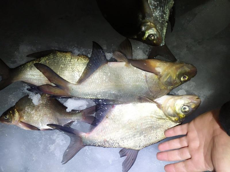 Очередной отчёт с рыбалки, нарыбачились вдоволь! 👇👇👇✅✅