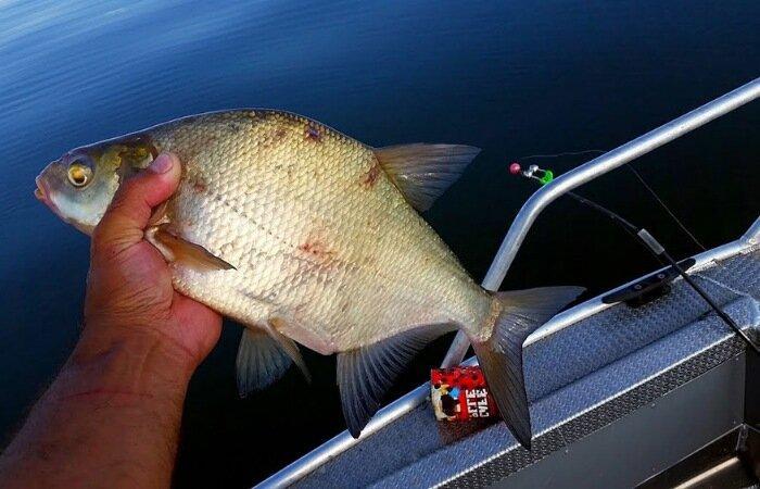 Снасть кольцовка. Ловля белой рыбы на кольцо