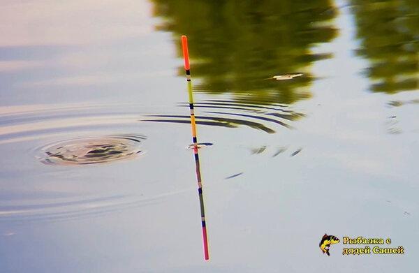 Так ли уж сильно влияет диаметр поводка на заметность его для рыбы, и так ли уж важна эта заметность