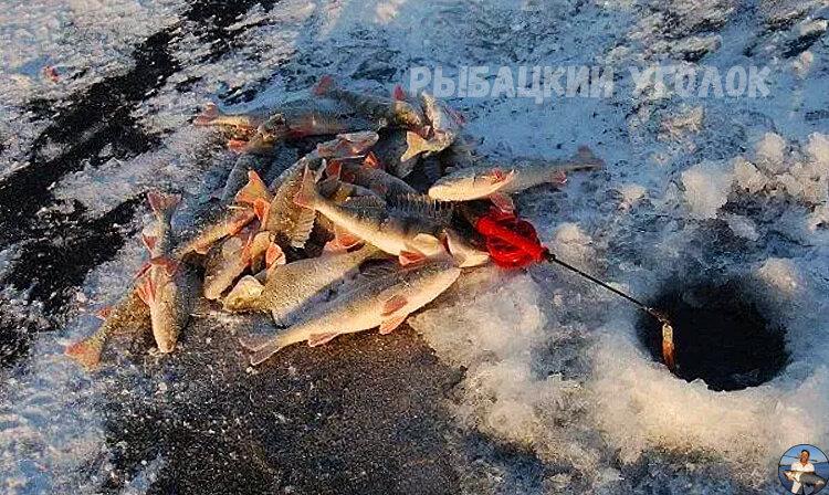 Знакомый рыбак сделал лунки необычным способом и обловил нас в 4 раза. Делюсь его интересным методом