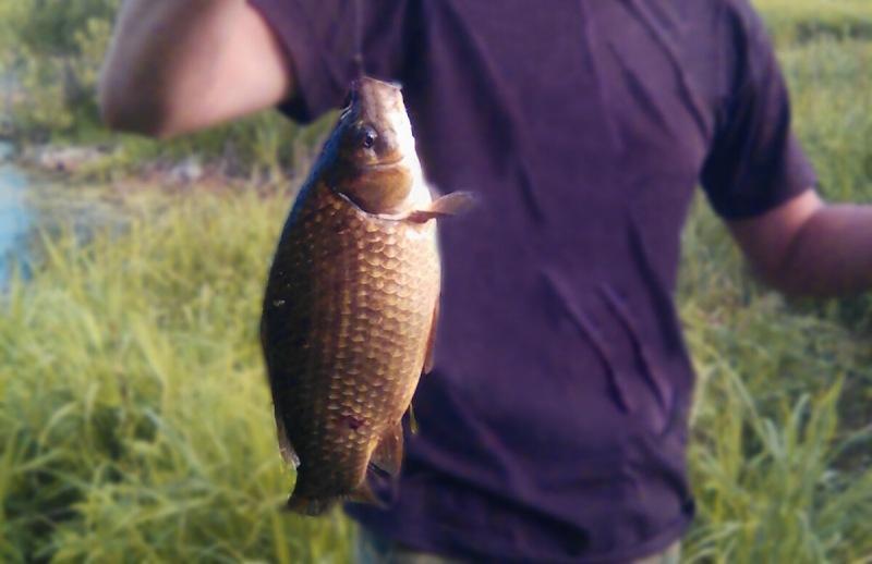 Я уступил рыбаку место, он отблагодарил классной самодельной насадкой на карася! Делюсь рецептом