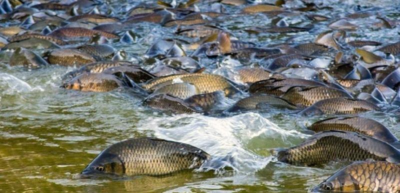 Календарь рыболова на апрель 2021