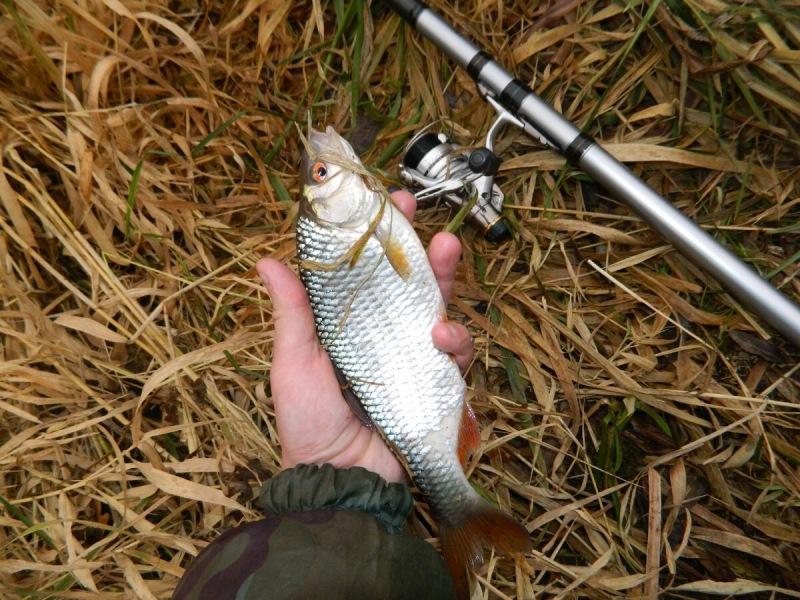 Ловля плотвы ранней весной. Секреты опытных рыболовов