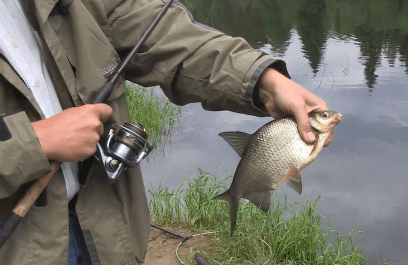 Накажут ли за лов рыбы на донку в запретку со спиннинговым удилищем