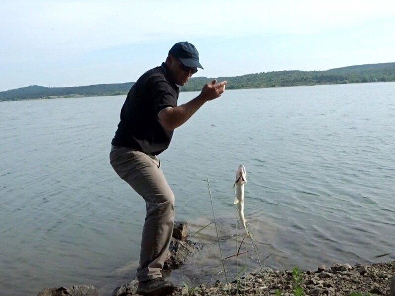Наконец-то получен ответ от рыбоохраны по щуке. Можно ли ловить в нерест спиннингом и другими снастями