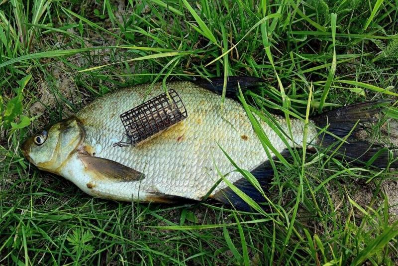 О прикормках для ловли на фидер. Все, что нужно знать для успешной рыбалки