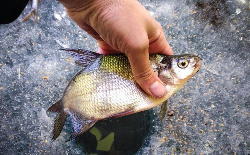 """Показываю самодельную приманку, которая одинаково хорошо ловит и """"мирную"""" рыбу и полосатых хищников"""