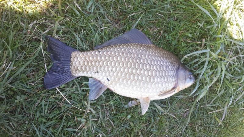 Топ лучших наживок для весенней ловли карася. Секретное меню, которое должен знать каждый рыбак!