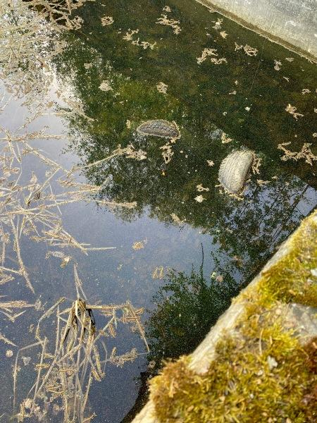 Необычная рыбалка: показываю, что я поймал, в заброшнном бассейне, в лесу.