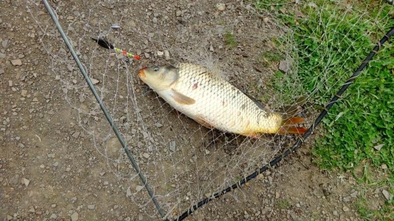 Рыба не хочет клевать на кукурузу, хотя в водоёме есть крупные сазаны с карпами. В чем ошибки рыболова при поимке.