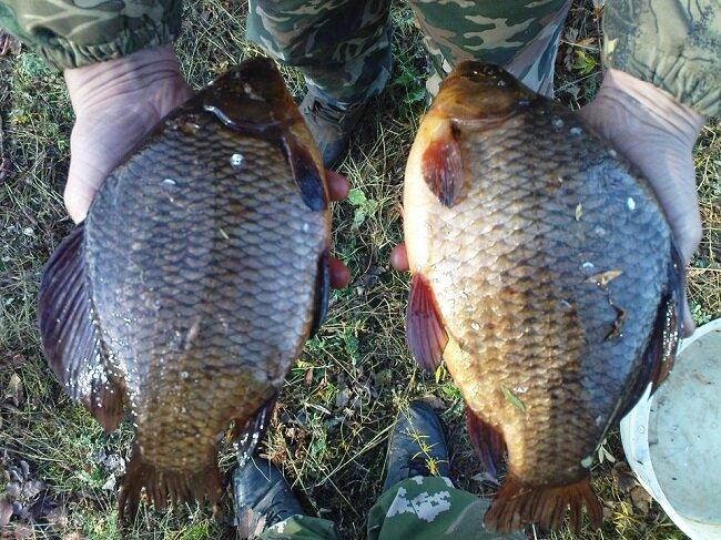 Рыбацкая наживка, на которую активно реагирует вся рыба. Эффективнее сала и вымени