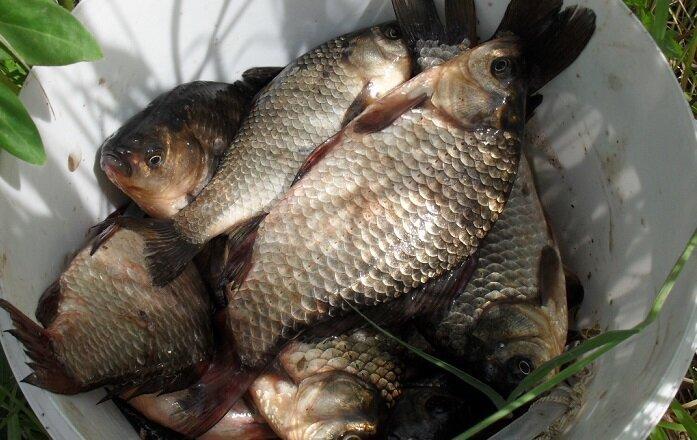 Убойный ароматизатор на карася и другую рыбу. Работает всю весну и лето