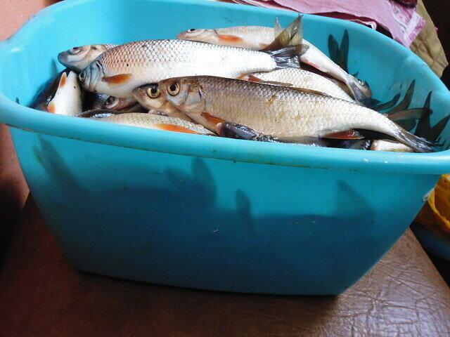 10 килограмм уловистого прикорма за 500 рублей. Хватит на целый год