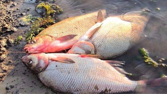 Мотыльный хлеб. Отличная и уловистая насадка для ловли рыбы в остывающей воде