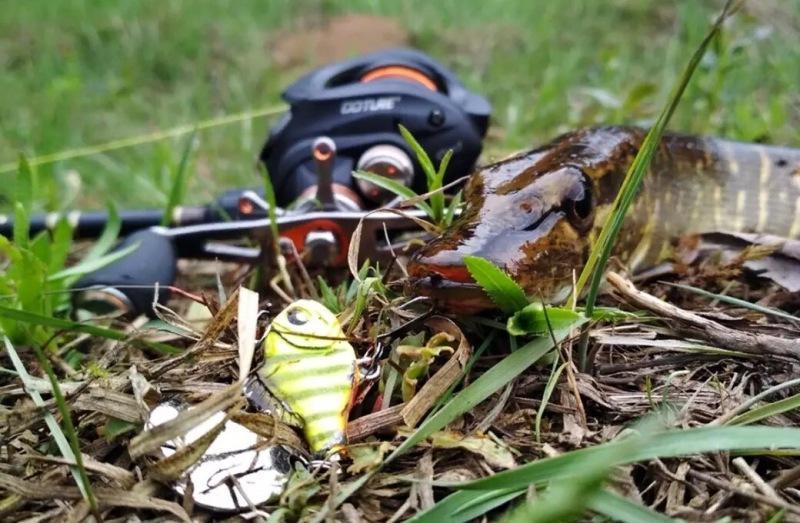 Обзор BAT Spinner Killer: непривычная приманка с высокой результативностью