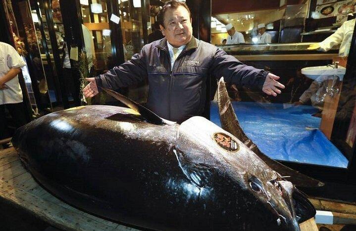 Расскажу, пожалуй, про самую дорогую рыбу на планете. Голубой тунец весом 222 кг за 1 760 000$